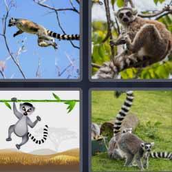 4 fotos 1 palabra mono cola rallada