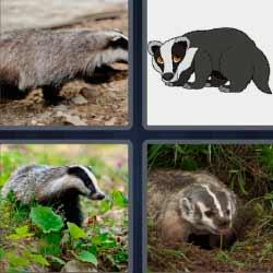 4 fotos 1 palabra tejón