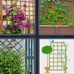 4 fotos 1 palabra plantas trepadoras