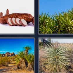 4 fotos 1 palabra fruto palma