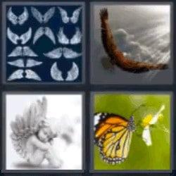 4 fotos 1 palabra mariposa ángel alas águila