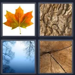 4 fotos 1 palabra hoja seca