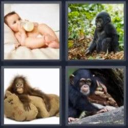 4 fotos 1 palabra bebé con biberón, chimpancé, mono