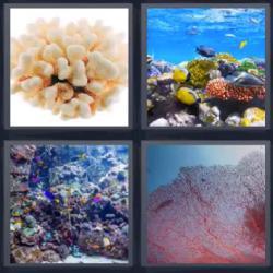 4 fotos 1 palabra corales mar