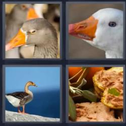 4 fotos 1 palabra oca pato paté