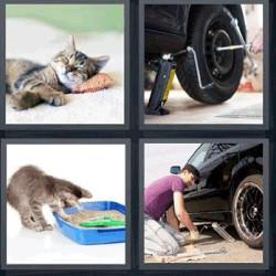 4 fotos 1 palabra gato durmiendo llanta
