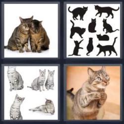 4 fotos 1 palabra siluetas gatos