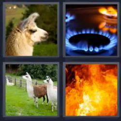 4 fotos 1 palabra fuego animal peludo
