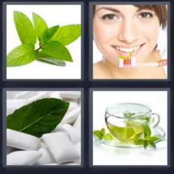 4 fotos 1 palabra hojas verdes taza