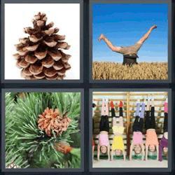 4 fotos 1 palabra piña niños de cabeza