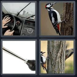 4 fotos 1 palabra bocina pájaro carpintero