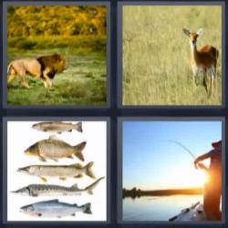 4 fotos 1 palabra peces león