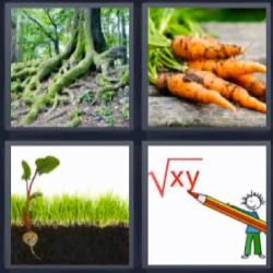 4 fotos 1 palabra zanahoria raíz