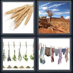 4 fotos 1 palabra trigo