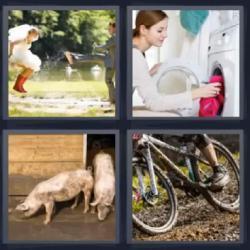 4 fotos 1 palabra cerdos bicicleta
