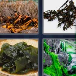 4 fotos 1 palabra algas rocas