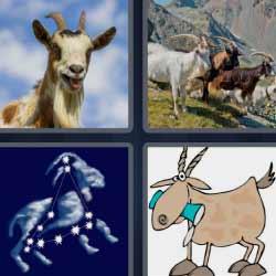 4 fotos 1 palabra venado con cuernos