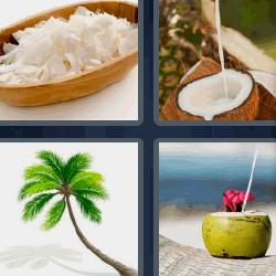 4 fotos 1 palabra palmera, coco