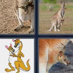 4 fotos 1 palabra canguro