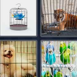 4 fotos 1 palabra tigre en una jaula, pájaro azul, perro