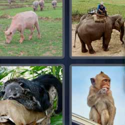 4 fotos 1 palabra mono elefante
