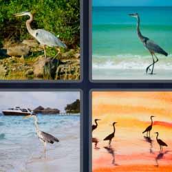 4 fotos 1 palabra aves garzas
