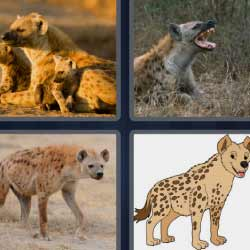 4 fotos 1 palabra hiena perros salvajes