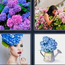 4 fotos 1 palabra flores moradas, azules y rosas