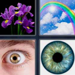 4 fotos 1 palabra flores moradas