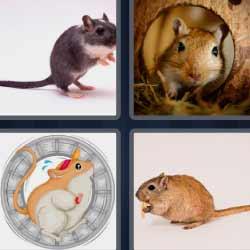 4 fotos 1 palabra raton
