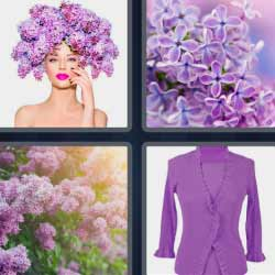 4 fotos 1 palabra flores moradas 4 letras