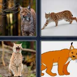 4 fotos 1 palabra gato grande