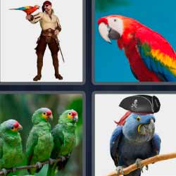 4 fotos 1 palabra pirata loro