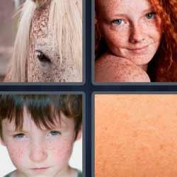 4 fotos 1 palabra caballo piel