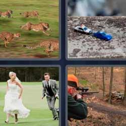 4 fotos 1 palabra leopardos pareja de recién casados corriendo
