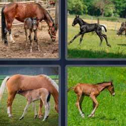 4 fotos 1 palabra caballos