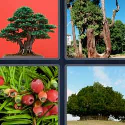 4 fotos 1 palabra bonsai