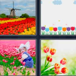 4 fotos 1 palabra tulipanes flores holanda